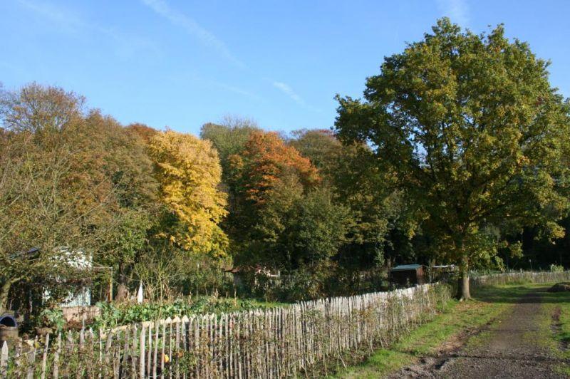 Photo(s) du jour : couleurs d'automne dans Automne automne0701
