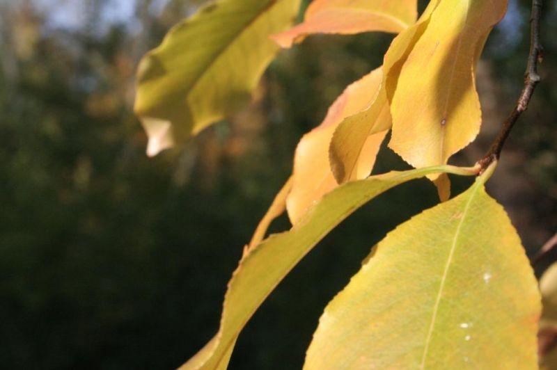 automne0710