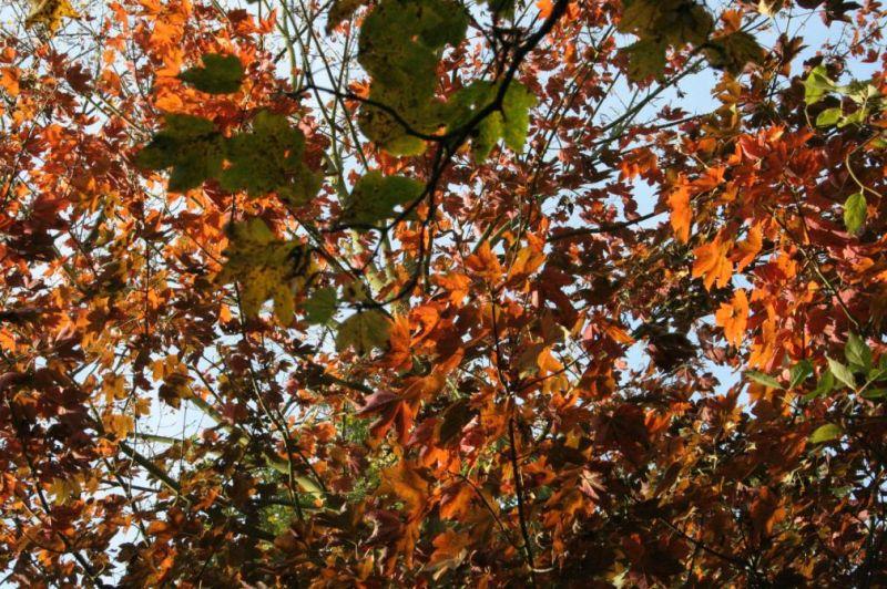 automne0711