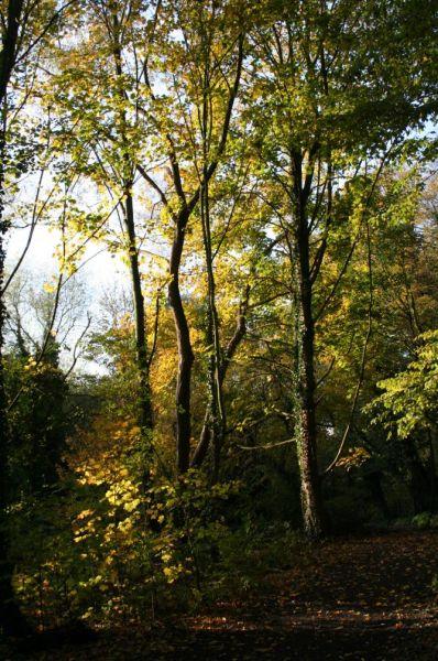 Photo(s) du jour dans Automne automne0712