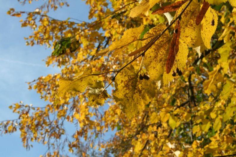 automne0714