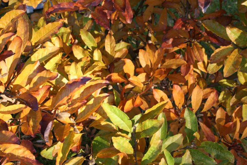 automne0715