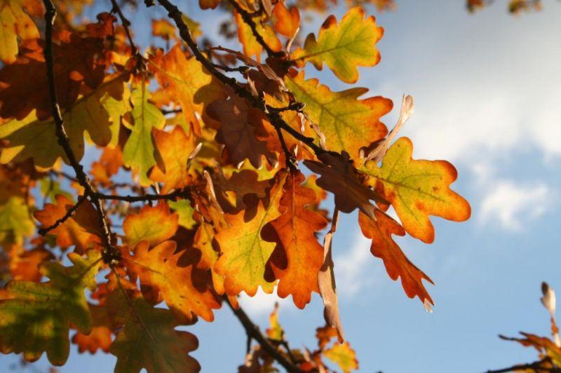 automne0716
