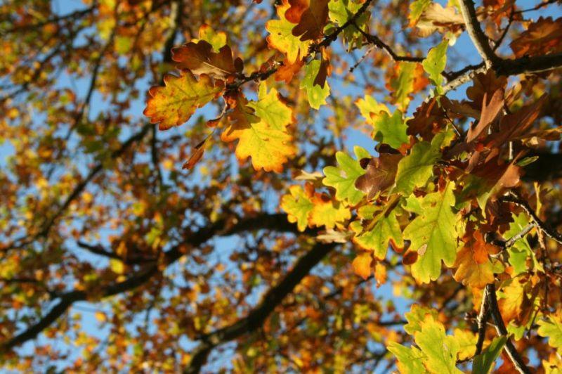 automne0718