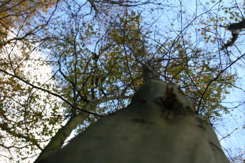 Photo(s) du jour dans Automne automne0719