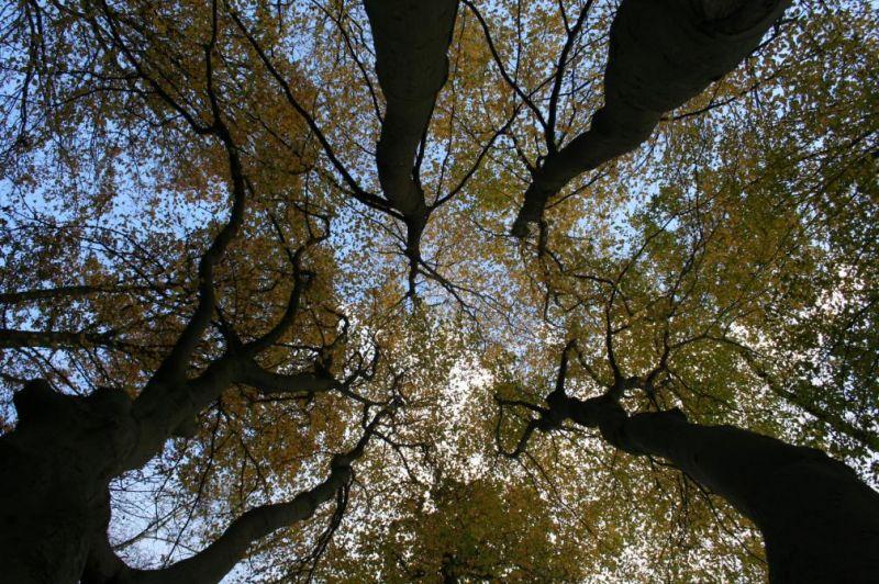 automne0723