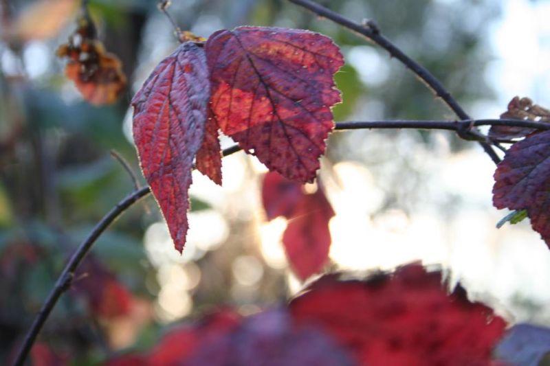 automne0726