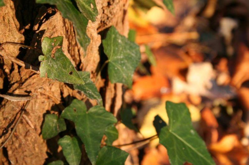 automne0727