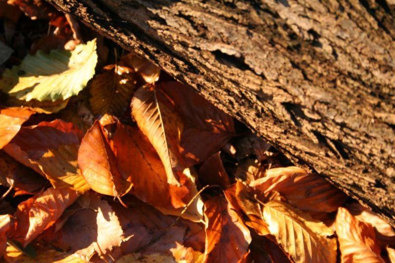 Photo(s) du jour dans Automne automne0729