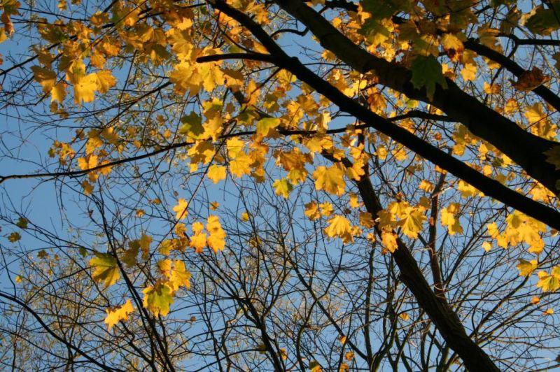 automne0730 dans Photos