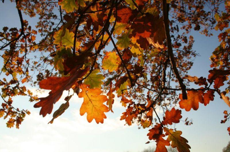 automne0731