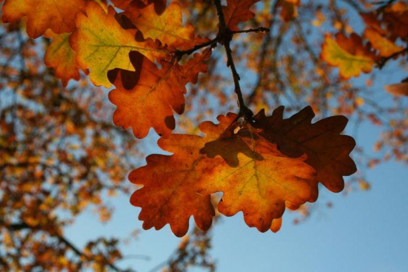automne0732
