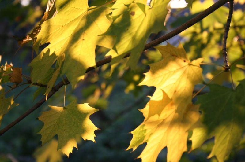 Photo(s) du jour dans Automne automne0734