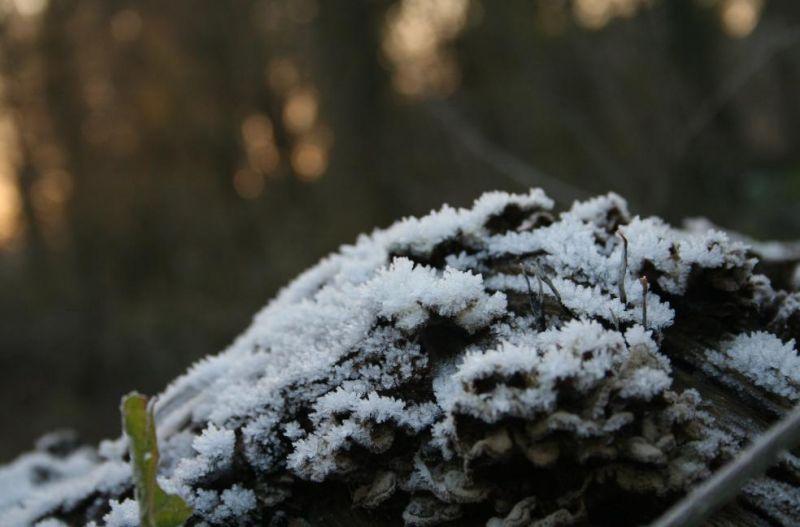 Gelé dans Hiver hiver03