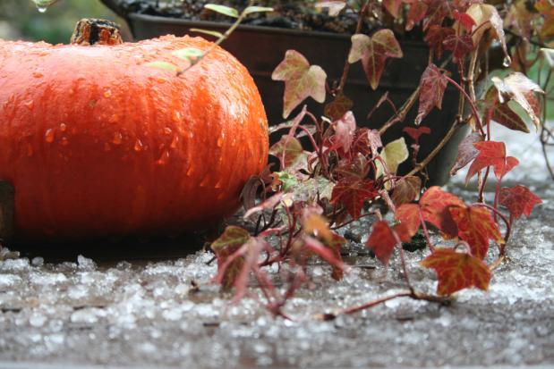 Dernières couleurs d'automne dans Automne auto01